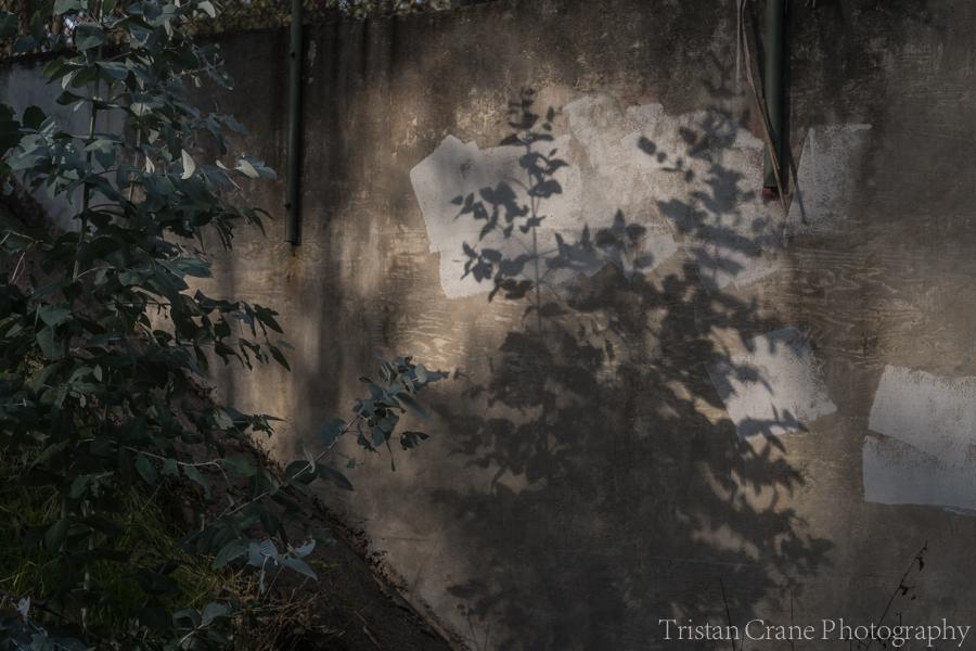 tcphotography_hike_dscf6891